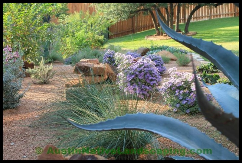Austin Native Landscaping Portfolio And Reviews
